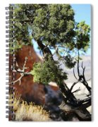 Red Rock Canyon Nv 5 Spiral Notebook