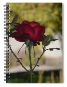 Red Rose 1 Spiral Notebook
