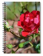 Red Rose And Buds Spiral Notebook