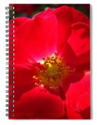Red Rose Art Print Sunlit Roses Botanical Giclee Baslee Troutman Spiral Notebook