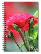 Red Rose Flower Spiral Notebook
