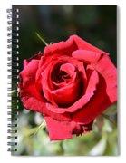 Red Rose Landscape Spiral Notebook