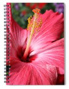 Red Rose Of Sharon  Spiral Notebook