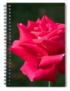 Red Rose Profile Spiral Notebook