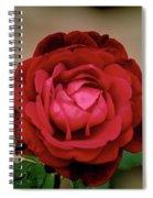 Red Rose  V2 Spiral Notebook