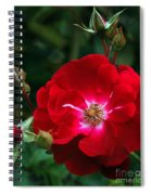 Red Rose With Buds Spiral Notebook