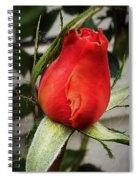 Red Rosebud  Spiral Notebook