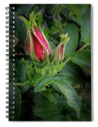 Red Rugosia Bud Spiral Notebook