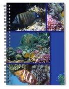 Red Sea Collage Spiral Notebook
