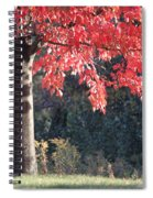 Red Shade Tree Spiral Notebook