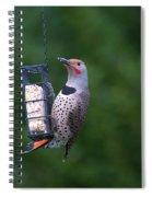 Red-shafted Northern Flicker On Suet Spiral Notebook
