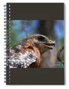 Red Shouldered Hawk - Profile Spiral Notebook