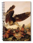 Red Shouldered Hawk Attacking Bobwhite Partridge Spiral Notebook