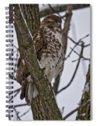 Red Shouldered Hawk - Madison - Wisconsin Spiral Notebook
