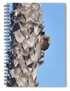 Red Shouldered Hawk On Palm Tree Spiral Notebook