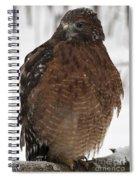 Red Shouldered Hawk Portrait Spiral Notebook