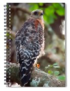 Red-shouldered Hawk Spiral Notebook
