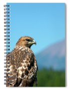 Red-shouldered Hawk With Mt. Mclaughlin In The Background Spiral Notebook