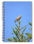 Red-shouldered Perch Spiral Notebook