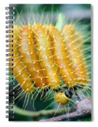 Red Spot Jezebel Spiral Notebook