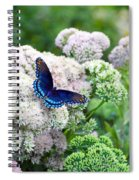 Red Spotted Purple Butterfly On Sedum Spiral Notebook