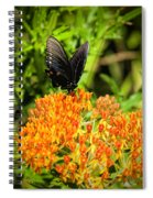 Red Spotted Purple Butterfly Spiral Notebook