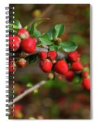 Red Spring Buds Spiral Notebook