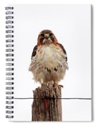 Red Tail Spiral Notebook