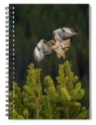 Red-tail Flight At Sunset Spiral Notebook