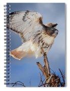 Red Tail Hawk Perch Spiral Notebook