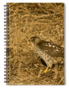 Red Tail Hawk Walking Spiral Notebook