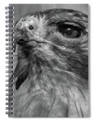 Red-tailed Hawk 2 Spiral Notebook