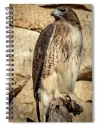 Red-tailed Hawk 4 Spiral Notebook