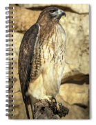 Red-tailed Hawk 5 Spiral Notebook