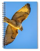 Red Tailed Hawk II Spiral Notebook