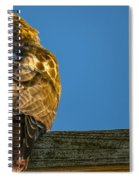Red Tailed Hawk  IIi  Spiral Notebook