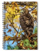 Red-tailed Hawk In Fall Color Spiral Notebook