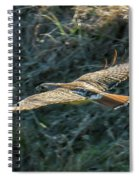 Red Tailed Hawk  In Flight Spiral Notebook