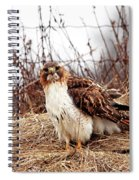 Red Tailed Hawk In The Field Spiral Notebook