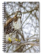 Red Tailed Hawk,  Spiral Notebook