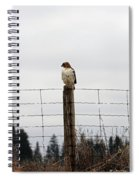 Red Tailed Hawk On The Lookout Spiral Notebook