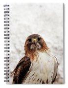 Red Tailed Hawk Portrait Spiral Notebook