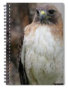 Red-tailed Hawks Spiral Notebook