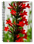 Red Texas Plume Flowers Spiral Notebook