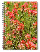 Red Texas Wildflowers Spiral Notebook
