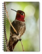 Red Throated Hummingbird Spiral Notebook