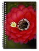 Red Torch Cactus-echinopsis  Spiral Notebook