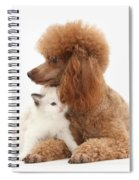 Red Toy Poodle And Kitten Spiral Notebook