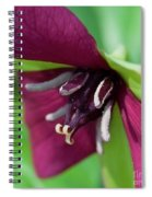 Red Trillium.. Spiral Notebook
