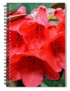 Red Trumpet Rhodies Spiral Notebook